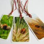 Ladybirds No.1 gift tag bookmarks (..