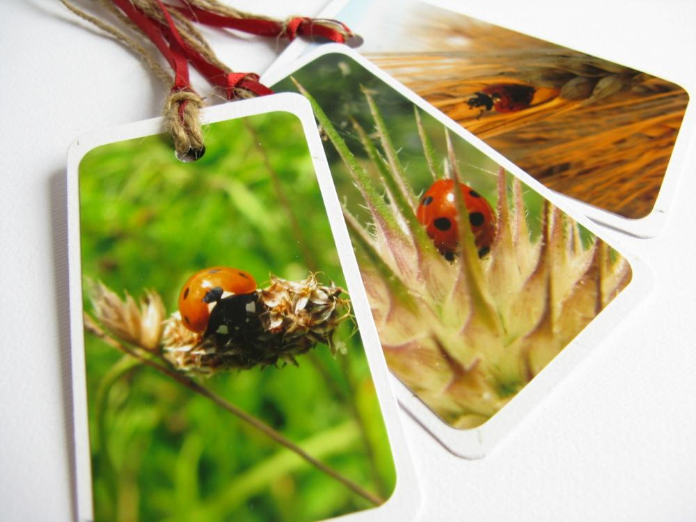 Ladybirds No.1 gift tag bookmarks (set of 3)