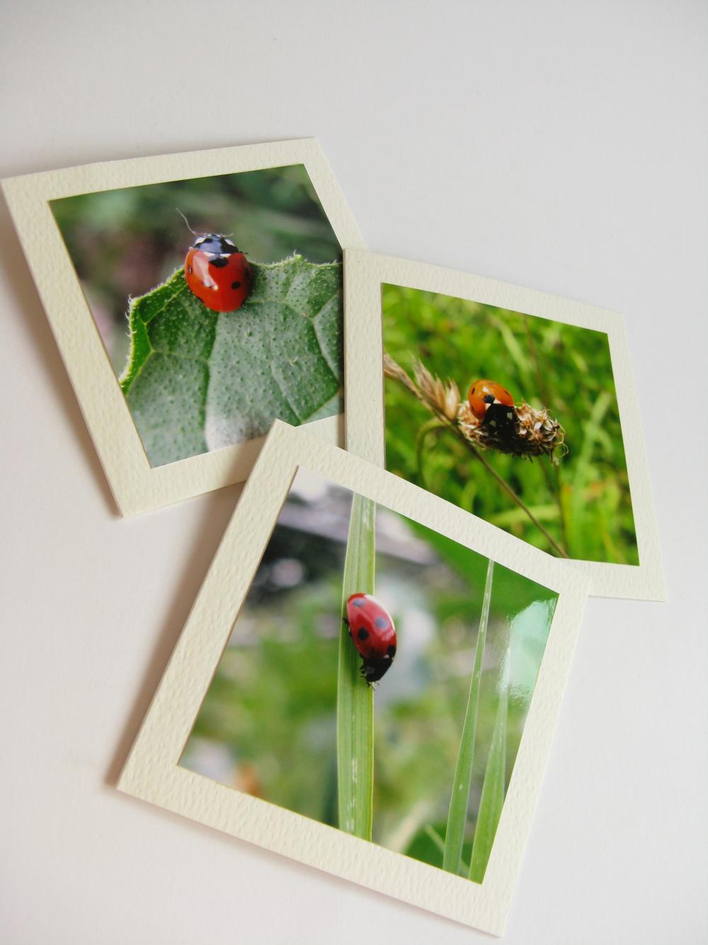 Ladybirds small photo notecards (set of 3)