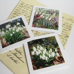 Snowdrops small photo notecards (set of 3)