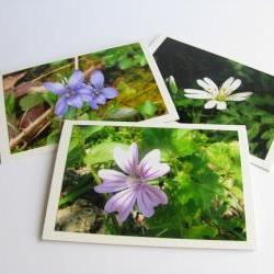 Shady Wildflowers photo notecards (set of 3)